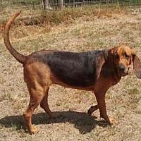 Adopt A Pet :: Sabrina - Seguin, TX