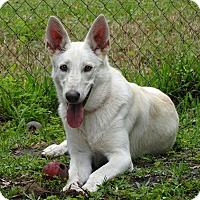 Adopt A Pet :: April - Green Cove Springs, FL