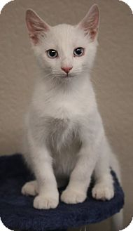 Domestic Shorthair Kitten for adoption in Riverside, California - Radar