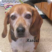 Adopt A Pet :: Rascal - Warren, PA