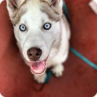 Adopt A Pet :: Skye - San Francisco, CA