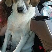 Adopt A Pet :: Irie - Smithtown, NY