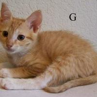 Adopt A Pet :: G - Austin, TX