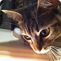 Adopt A Pet :: Sunshine - Tampa, FL