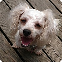 Adopt A Pet :: Mary - Farmington Hills, MI