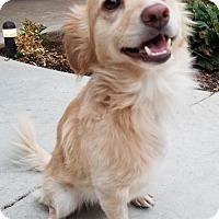 Adopt A Pet :: Sam - Fresno, CA