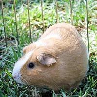 Adopt A Pet :: *Urgent* Sunny - Fullerton, CA