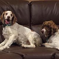 Adopt A Pet :: OH/Stewie & Meg - Kent, OH
