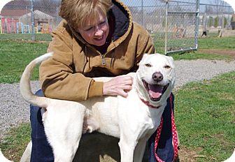 Labrador Retriever Mix Dog for adoption in Elyria, Ohio - Tanner-Prison Dog