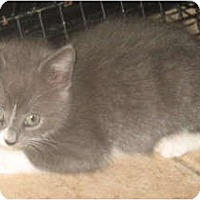 Adopt A Pet :: Rose - Acme, PA