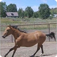 Adopt A Pet :: Firecracker - Durango, CO