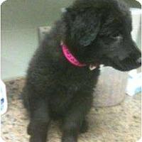 Adopt A Pet :: Sundown - Denver, CO