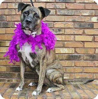 Mastiff Mix Dog for adoption in Benbrook, Texas - Ginger