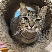 Adopt A Pet :: Melanie - Byron Center, MI