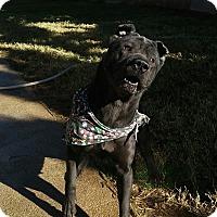 Adopt A Pet :: Melania - pending - Mira Loma, CA
