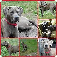 Adopt A Pet :: Jacob - Inverness, FL