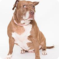 Adopt A Pet :: Princess - Jupiter, FL