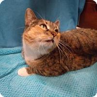 Adopt A Pet :: Liz - Napoleon, OH