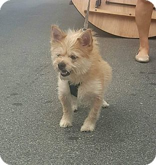 Terrier (Unknown Type, Small) Mix Dog for adoption in Bronx, New York - Romeo