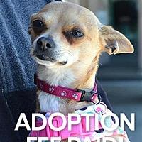 Adopt A Pet :: Biscuit 222008 - Petaluma, CA