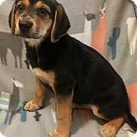 Hound (Unknown Type) Mix Puppy for adoption in Atlanta, Georgia - Diesel
