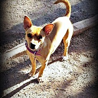 Adopt A Pet :: Rue - Tijeras, NM