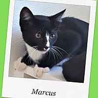 Adopt A Pet :: Marcus - Tombstone, AZ