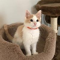 Adopt A Pet :: Lester - Lovingston, VA