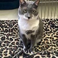 Adopt A Pet :: Carlee - Freeport, FL