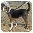 Photo 2 - Beagle/Shepherd (Unknown Type) Mix Dog for adoption in Berea, Ohio - Flower