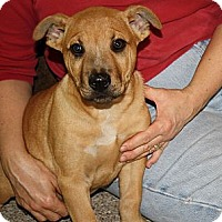Adopt A Pet :: Mac - Glastonbury, CT