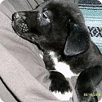 Adopt A Pet :: Alofa - Dundas, VA