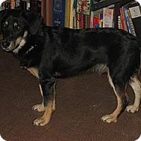 Adopt A Pet :: Logan - Hamilton, ON