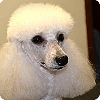 Adopt A Pet :: Layla - Blairstown, NJ