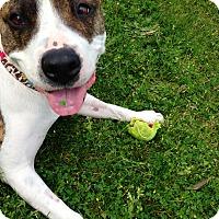 Adopt A Pet :: Hurley - La Habra, CA