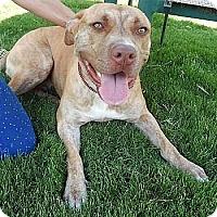 Adopt A Pet :: Brooklyn - Athens, GA