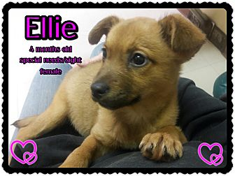 Mixed Breed (Small) Mix Puppy for adoption in Richmond, California - Ellie