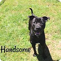 Adopt A Pet :: Handsome - Melbourne, KY