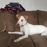 Adopt A Pet :: Riley - New Orleans, LA