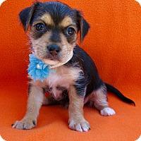 Adopt A Pet :: Marsha - Irvine, CA