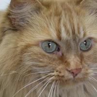 Adopt A Pet :: Fuzzy - Hayward, WI
