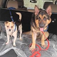 Adopt A Pet :: Lambchop and Shari - Morrisville, NC