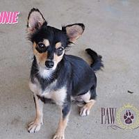 Adopt A Pet :: Frannie - Agoura Hills, CA