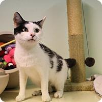 Adopt A Pet :: Sheba - Murphysboro, IL