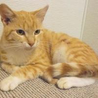 Adopt A Pet :: 36250803 - Portage, WI