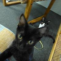 Adopt A Pet :: LT - Quincy, CA