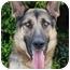 Photo 4 - German Shepherd Dog Dog for adoption in Los Angeles, California - Arnie von Andermatt