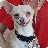 Adopt A Pet :: Donnie - Palmdale, CA