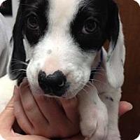 Adopt A Pet :: Wiser - Marshfield, MA