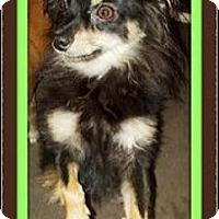 Adopt A Pet :: Trooper - Rancho Cucamonga, CA